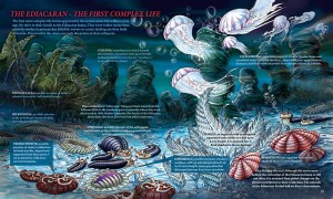 THE EDIACARAN – THE FIRST COMPLEX LIFE