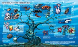 CLASSIFICATION OF INVERTEBRATES